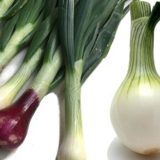 画像6: 無農薬・有機栽培 葉玉ねぎ 約2kg (6)