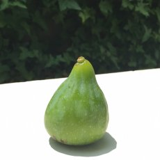 画像4: 無農薬・有機栽培  早生いちじく「ザ キング」  2パック約1kg 送料込 (4)