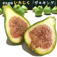 画像2: 無農薬・有機栽培  早生いちじく「ザ キング」  2パック約1kg 送料込 (2)