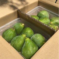 画像7: 無農薬・有機栽培  早生いちじく「ザ キング」  2パック約1kg 送料込 (7)
