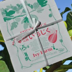 画像8: 無農薬・有機栽培  完熟いちじく  2パック約1kg 送料込 (8)