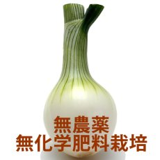 画像1: 無農薬・有機栽培 葉玉ねぎ 約2kg (1)
