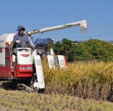画像6: 令和元年度産 業務用減農薬米 ひのひかり 5kg (6)