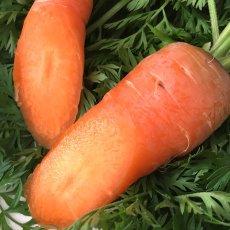 画像6: 無農薬・有機栽培 にんじん 約3kg (6)