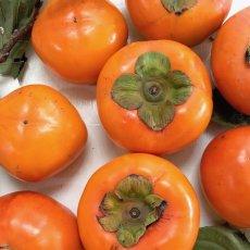 画像2: 無農薬・有機栽培 富有柿 1箱約2kg  送料込 (2)