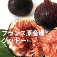 画像4:  無農薬・有機栽培 世界のいちじく* 2パック 送料込 (4)