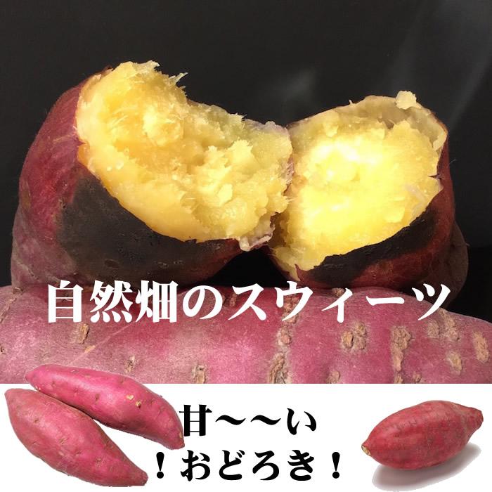 画像1: 無農薬・有機栽培 極甘蜜さつまいも 紅はるか大小混合 (1)