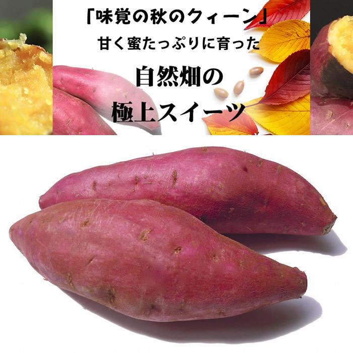 画像1: 無農薬・有機栽培 極甘蜜さつまいも 普通サイズ 約2kg (1)