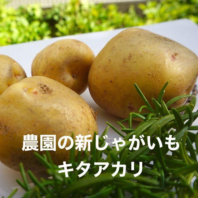 画像1: 無農薬・有機栽培 新じゃがいも/キタアカリ 約3kg 送料込み (1)