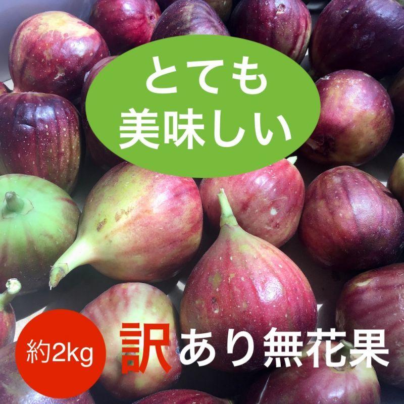 画像1: 無農薬・有機栽培  完熟いちじくジャム加工用予約購入 約2kg  送料込み 7月1日より値上りします。 (1)